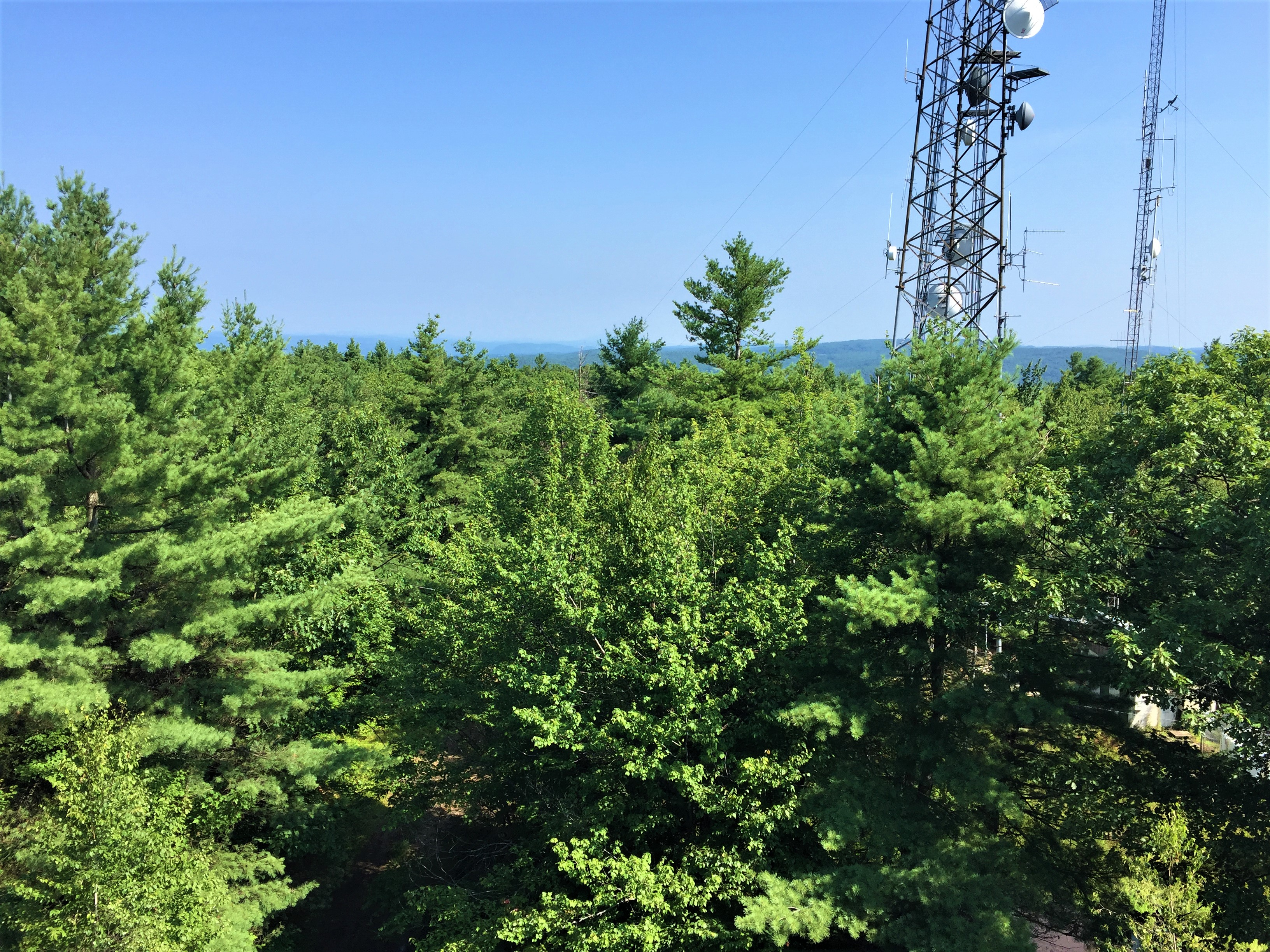 Hyland Hill Fire Tower Hike